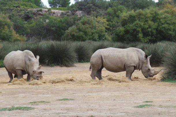 Носорог - Известни и неизвестни вегетарианци
