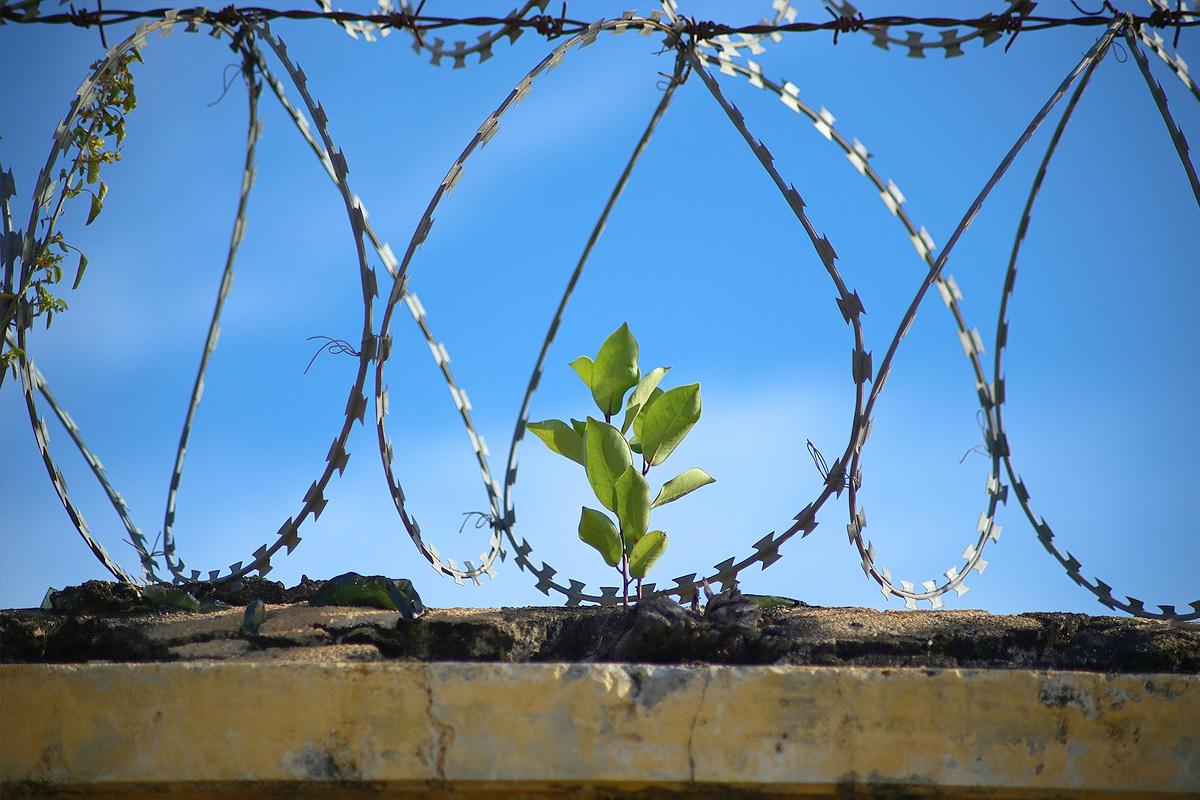 Затворите в щата Аризона са безмесни
