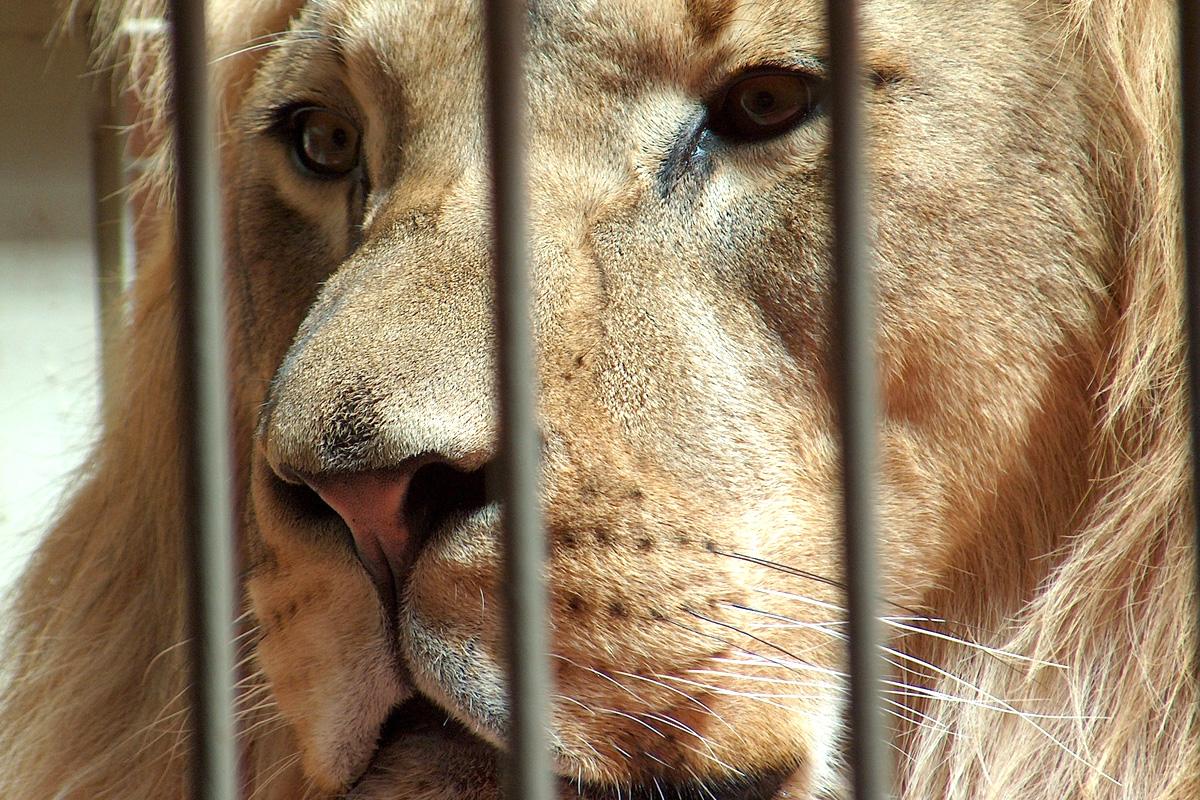 Коста Рика затваря всички свои зоологически градини