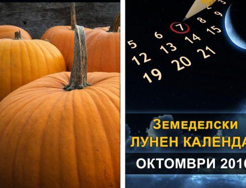Биодинамична характеристика за октомври 2016 г.