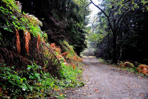 Есенна свежест на Витоша - галерия
