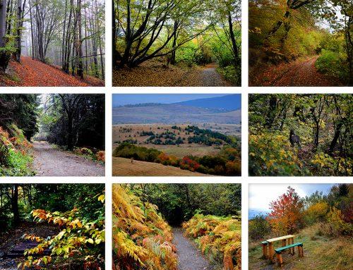 Есенна свежест на Витоша – галерия