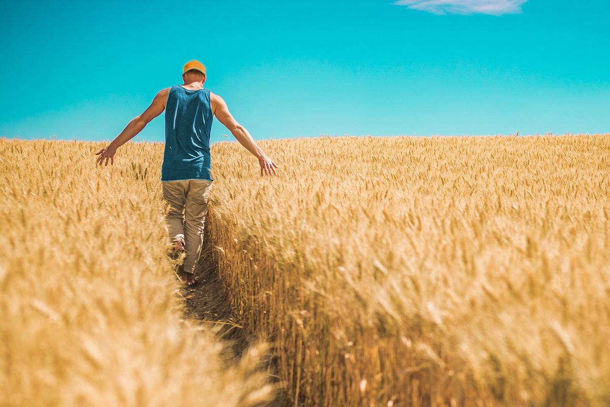 Първо посей житото, а после яж баница