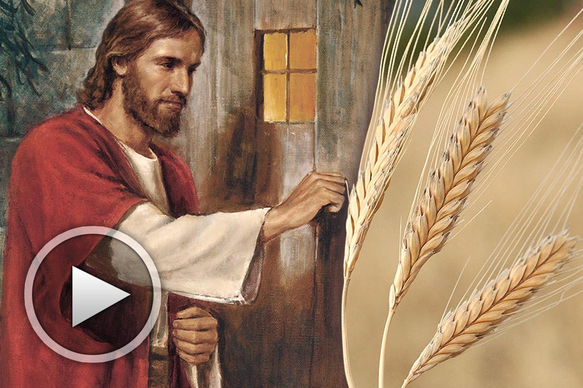 Христос и Житеното зърно