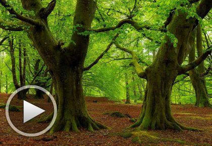 Учителя за изсичането на горите - кратък филм