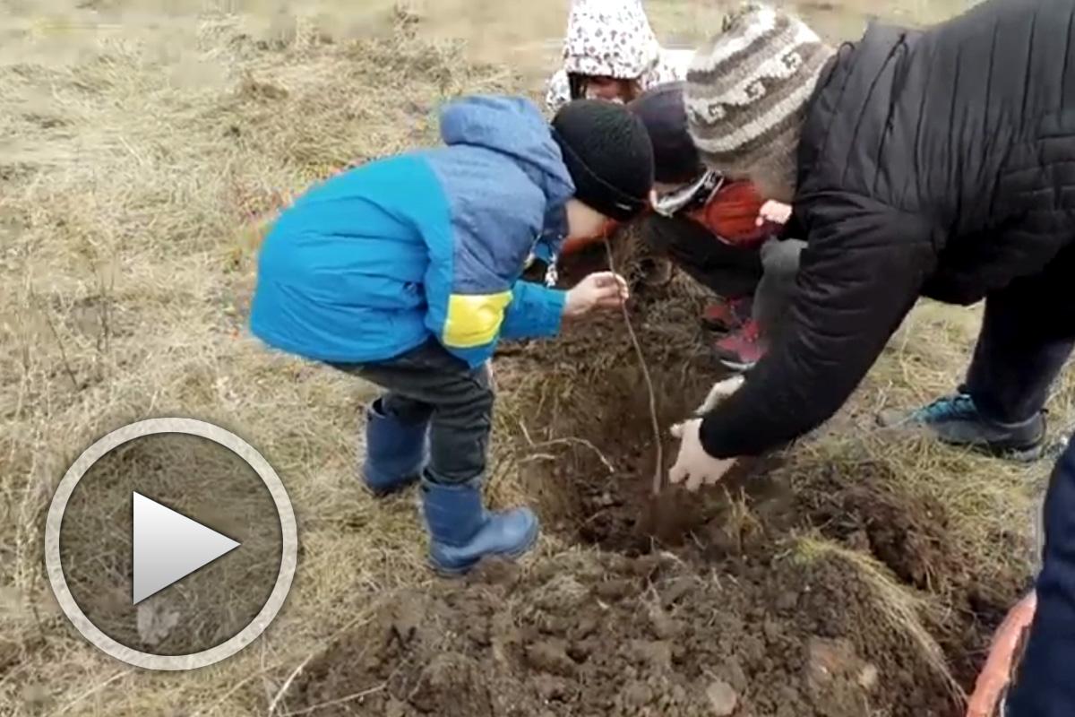 Дръвче да посадим