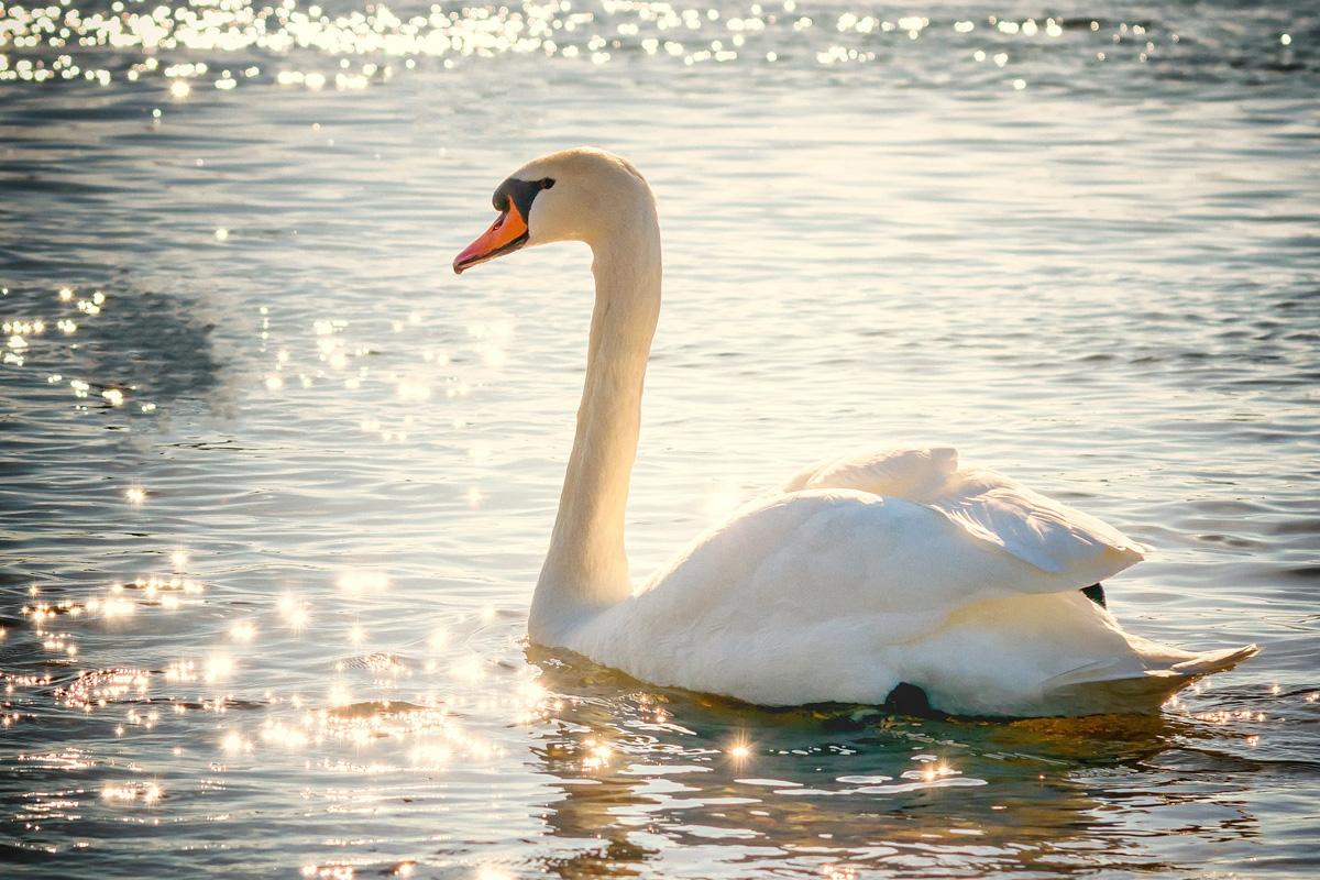 Когато човек люби, проявява истинската си природа